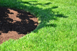 lawn and mulch